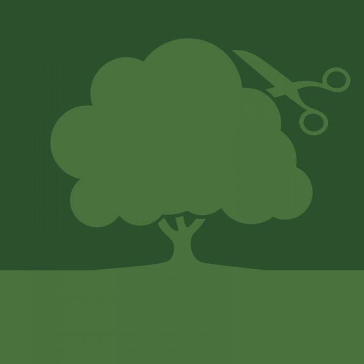 Schaufenster Baumpflege Rappolder